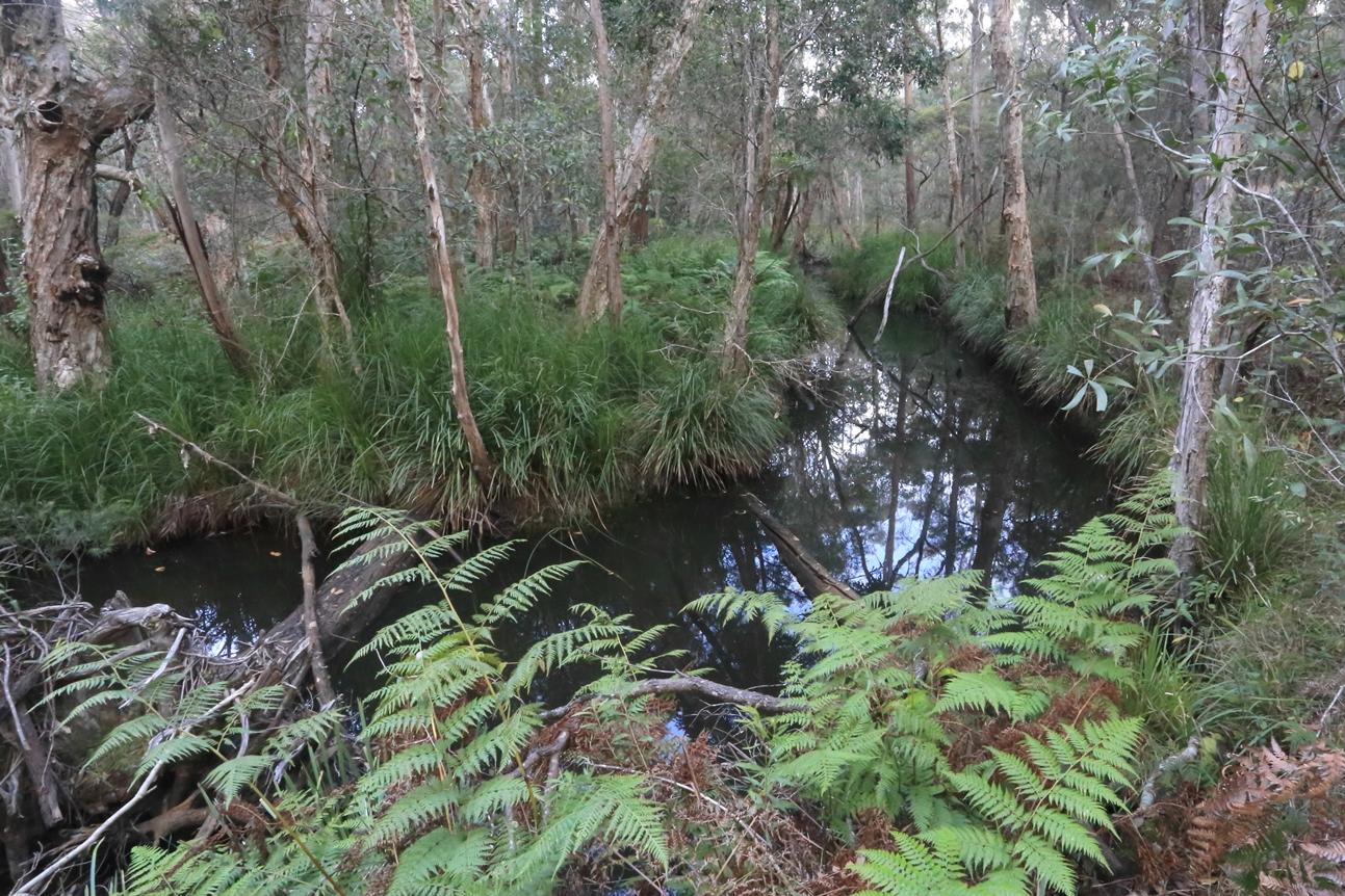 080 Venman Bushland Conservation Area 30 April 2016 comp